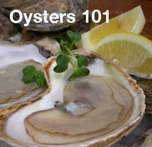 Oyster 101
